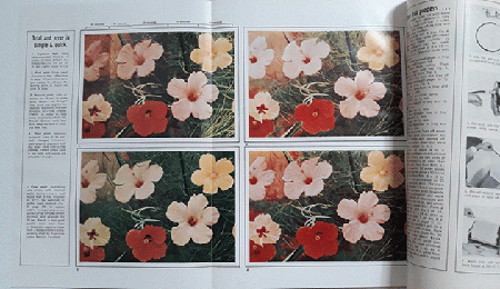 Patricia Caulfield's pictures of hibiscus flowers on the cover and two spreads of Modern Photography, June 1964.